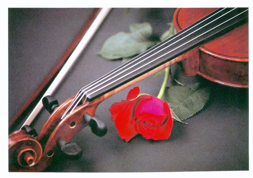 Indexation : Violon, roses##Epoque : Moderne##Propriété : Fan-054-Roy